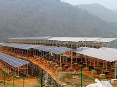 Chinese Academy of Engineering Research Group Field Survey Sunny Energy Photovoltaic Power Generation Project